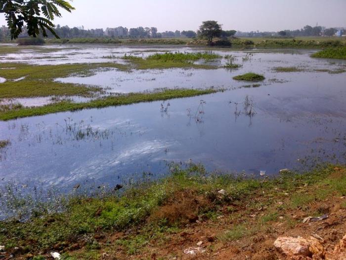Doddabommasandra Lake