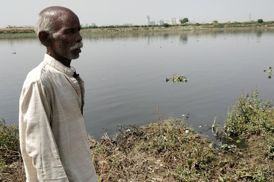 Noida wetlands